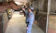 DENUNCIA MALTRATTAMENTI AGLI ANIMALI E GLI VENGONO SPEZZATE LE BRACCIA