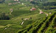 Le Colline del Prosecco di Conegliano e Valdobbiadene sono parte del  Patrimonio Mondiale dell'Umanità dell'UNESCO